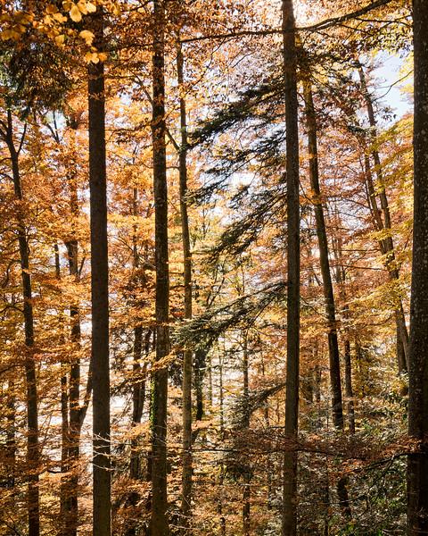 autumn-trees-switzerland.jpg