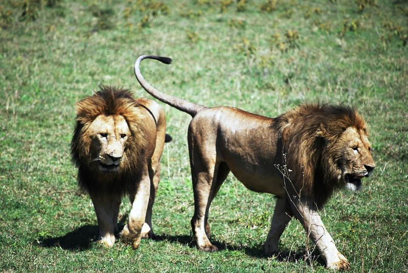 Ngorongoro (146).JPG