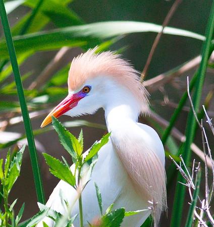 Anahuac National Wildlife Refuge   4-21-17