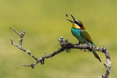 Birds of Calera