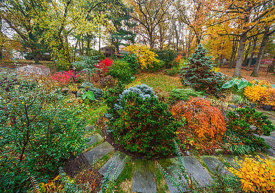 Backyard - Fall colors