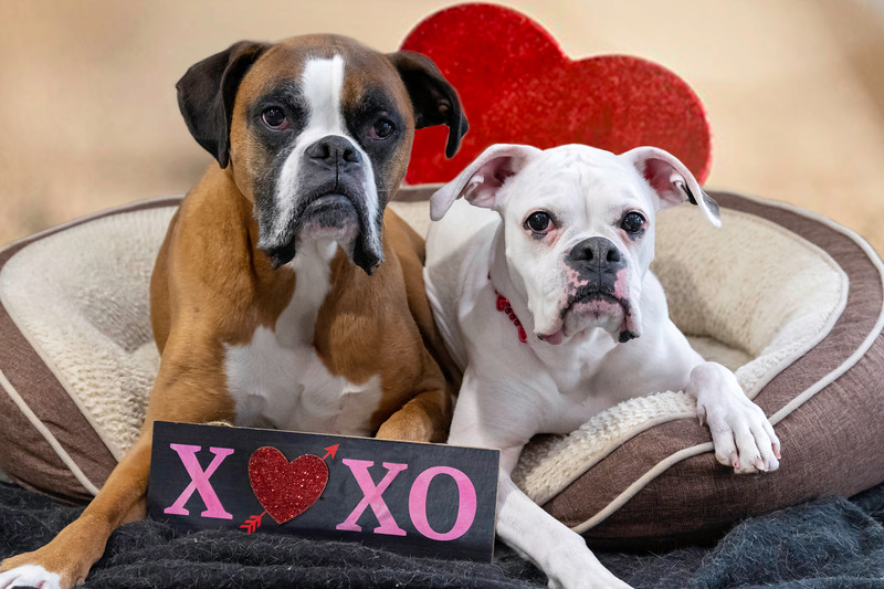 Trish's Diesel and Ella Valentines