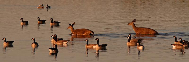 Deercrossing1600.jpg