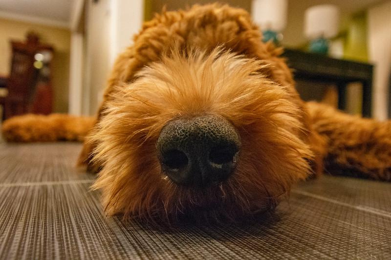 Calvin-snout-floor.jpg