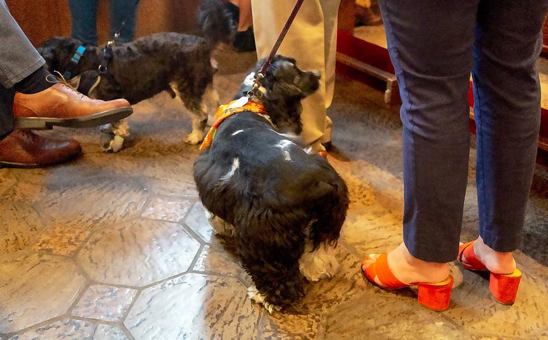 Dog&Feet.jpg