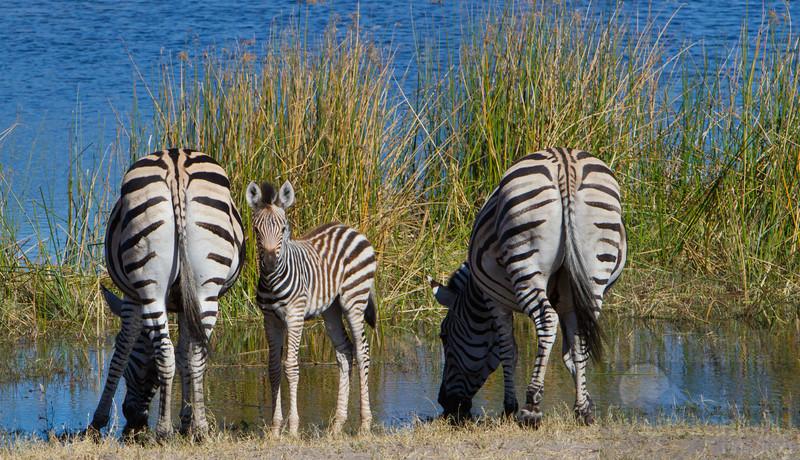 Botswana-20110715-2609.jpg