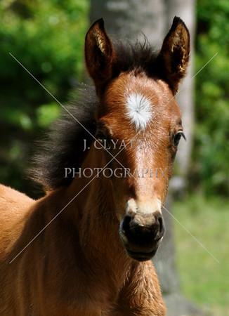 Cumberland Island/Wild Horses