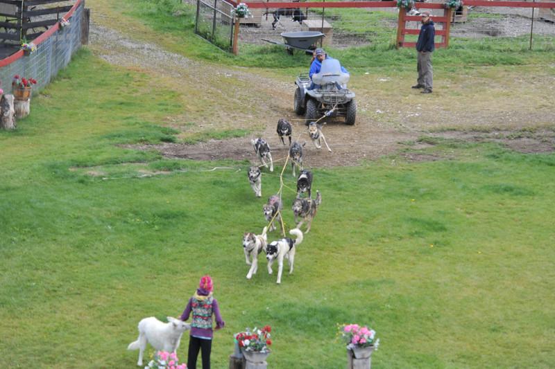 Susan Butcher's Trailbreaker Kennels
