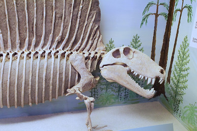2013-10-19 Dinosaur Museum (Price, Utah)