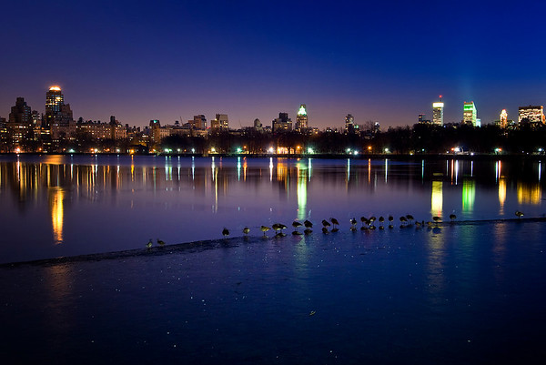 Geese on Ice<br /> Jacqueline Kennedy Onassis Reservoir