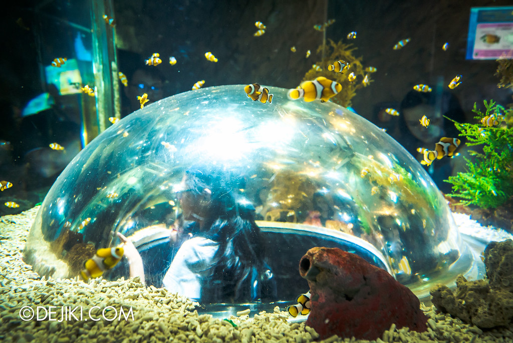 Underwater World Singapore - Clownfish Dome Tank 2 close up