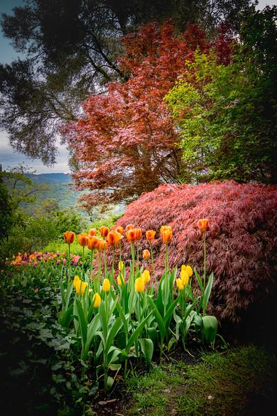 Hermitage Garden 2435