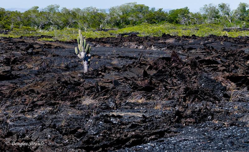 Rugged lava landscape at Punta Moreno, Isabela Island