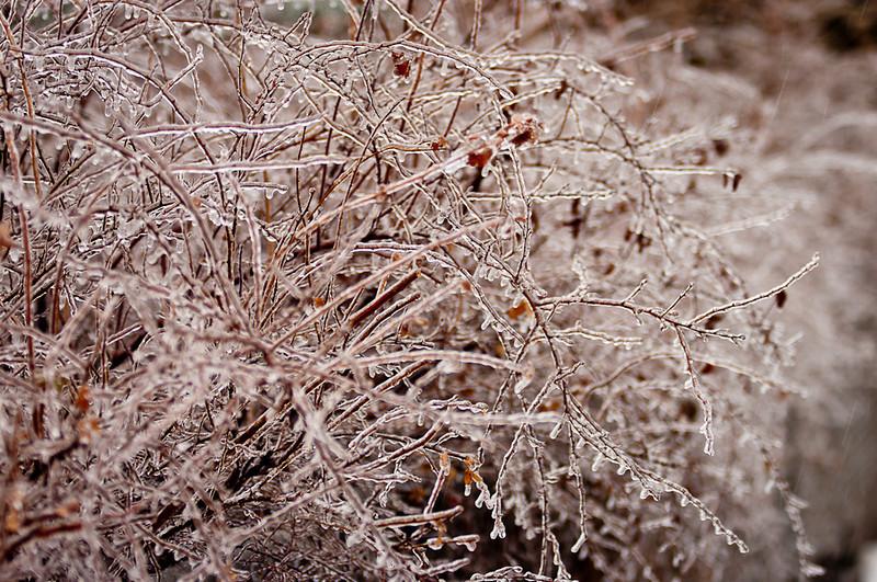 20110201-Snowmageddon-4306.jpg