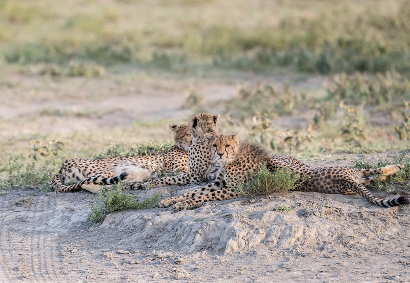 Tanzania_Feb_2018-80.jpg