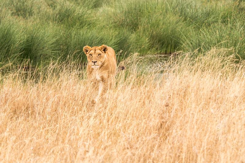 Tanzania_Safari-best-77.jpg