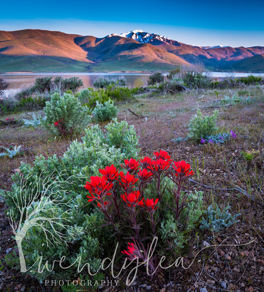 wlc Timp Flowers 050317May 03, 201714-Edit.jpg