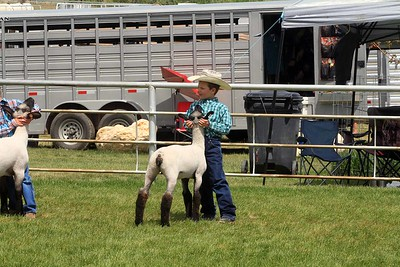 Pee Wee Sheep Showmanship Sunday