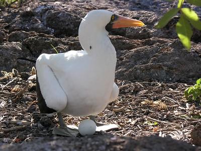 Galapagos March 2006