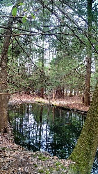Forested Pool