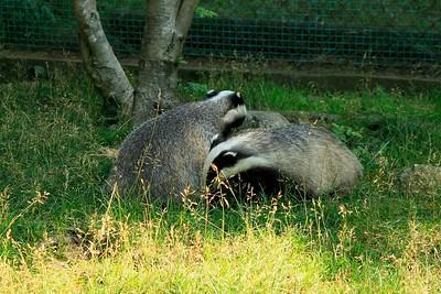 Ähtärin eläinpuisto ja muita eläinkuvia_