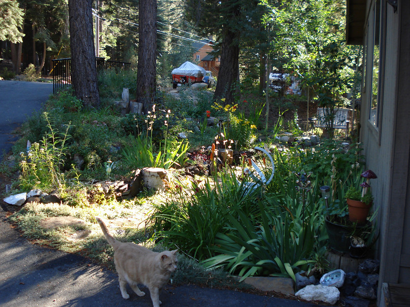 Front garden 08/31/2011