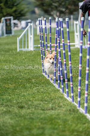 Del Monte KC Agility Trial - June 5th, 2016