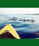 Kayaking Tours on Maui