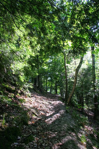 McSauba Path