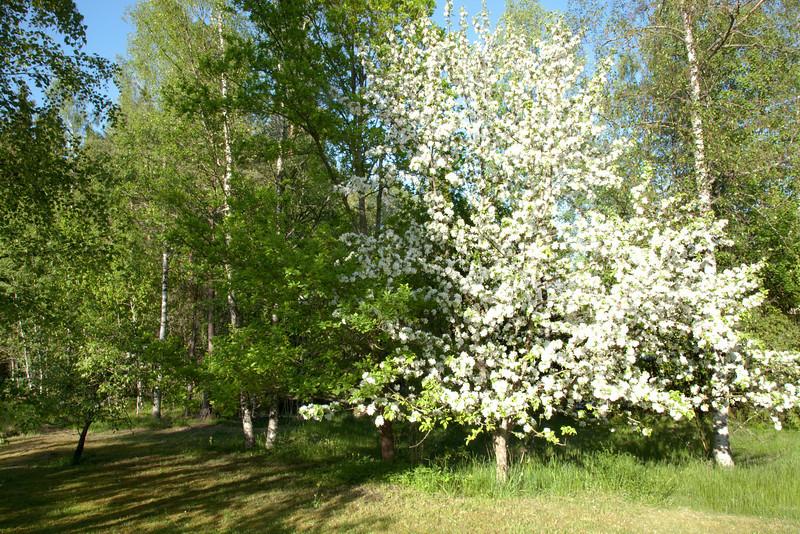 Dag_046_2012-maj-27_6736.jpg