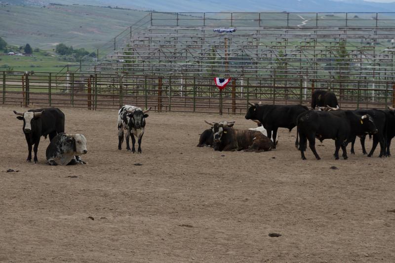 2011_07_04 Wyoming 019.jpg