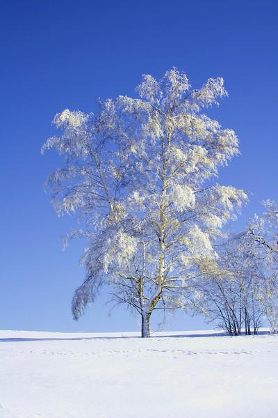 tree 07 .jpg