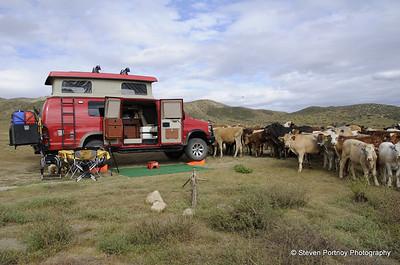 Carrizo Plains, April 23-24, 2011