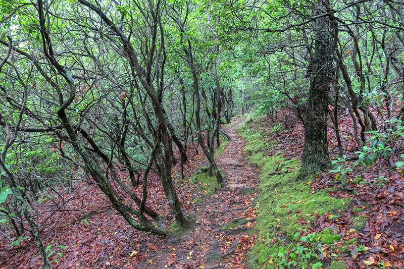 Mountains-to-Sea Trail -- 2,980'