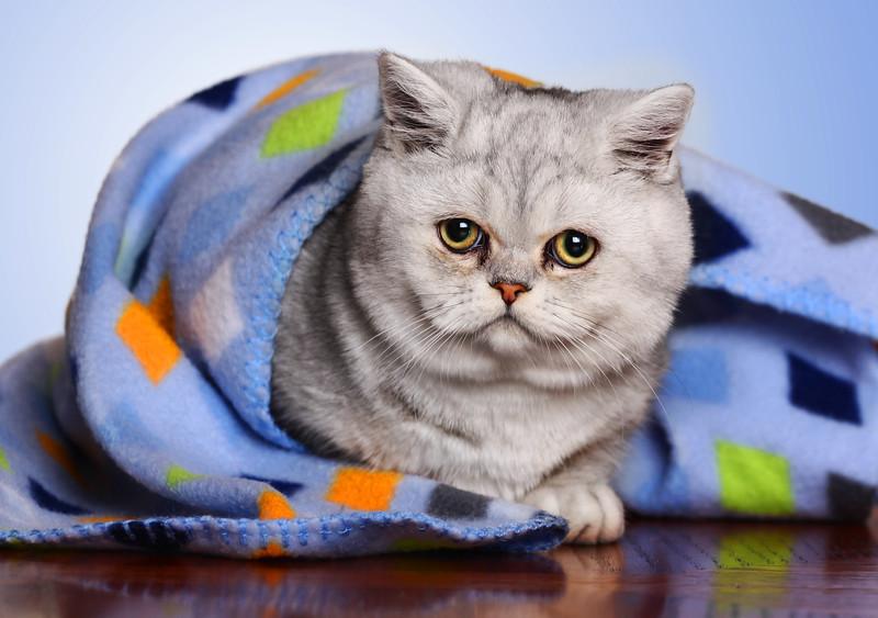 Lachine-cat-4.jpg