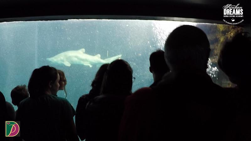 Expedition Pufferfish Day 4.00_15_13_08.Still041.jpg