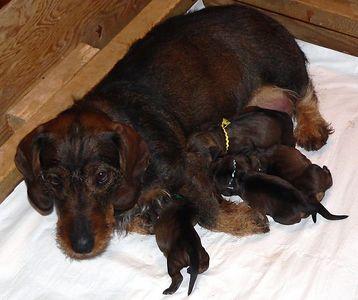 """""""K"""" pups - Gilda's litter (2005)"""