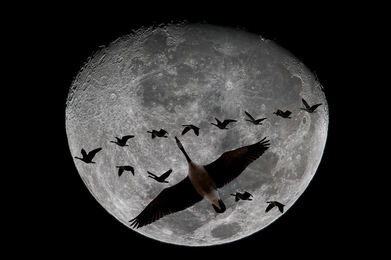 339-Goosey Moon 2010.JPG