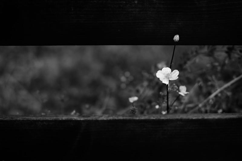 untitled-93.jpg