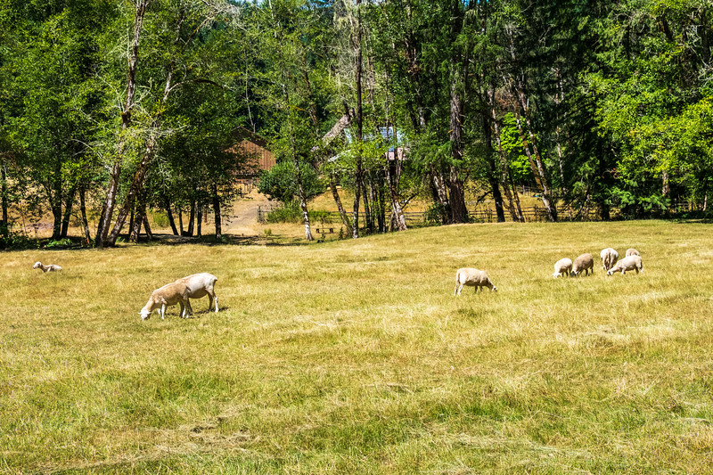 Leaping Lamb Farm-5553.jpg