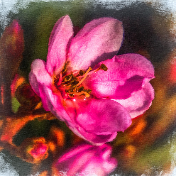 March 11 - Happy flower.jpg