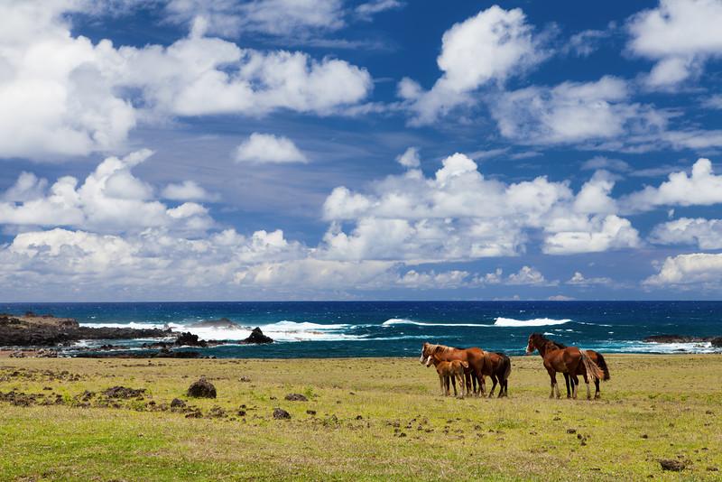 Easter Island-14.jpg
