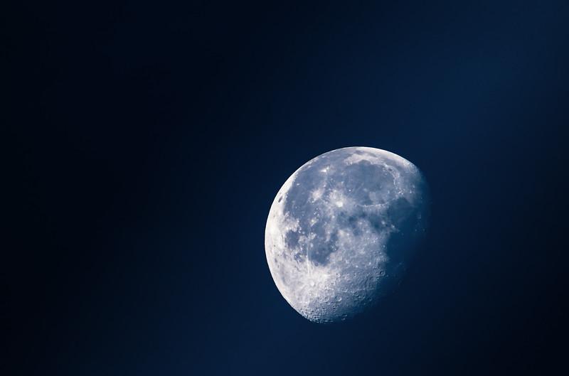 12-26-18 - Blackburn Hollow: Luna this morning.