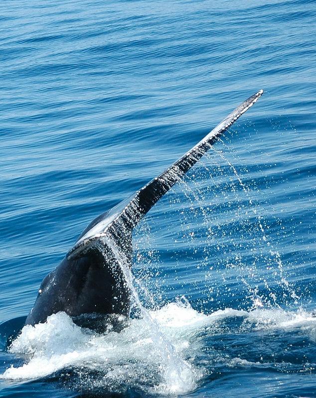 whale tail 10.JPG