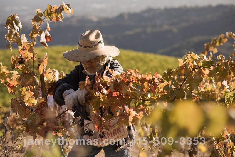 90930_Ridge_Harvest_228.jpg