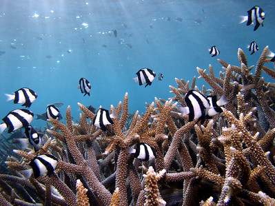 Photos for Reefs at Risk