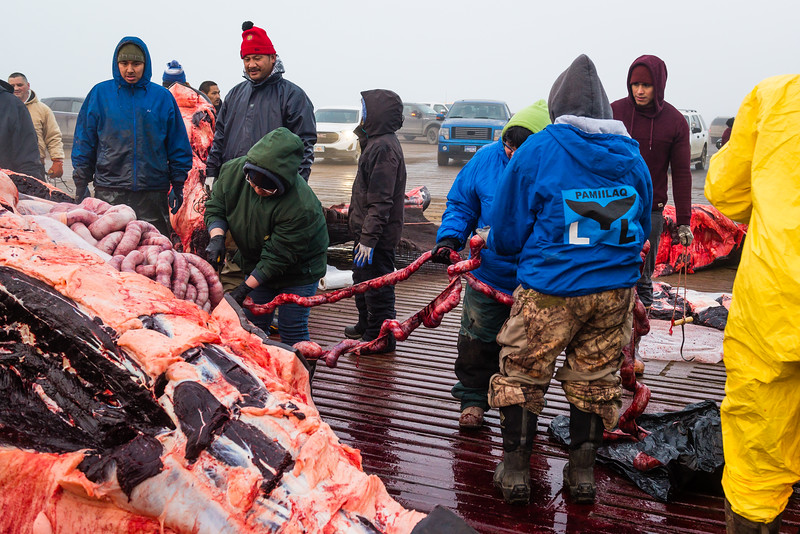 Utqiagvik Whaling-6105033-Juno Kim-nw.jpg