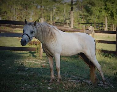 Horses Aug 2011