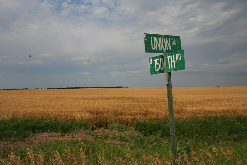 Wheat fields at the corner of Union and 150th a few miles northwest of Lincoln, Kansas.