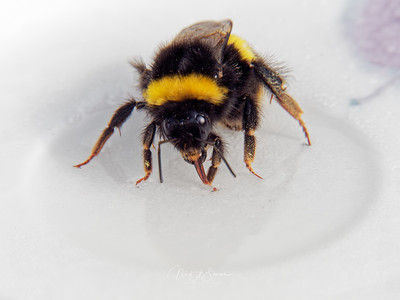 Reving a Bee